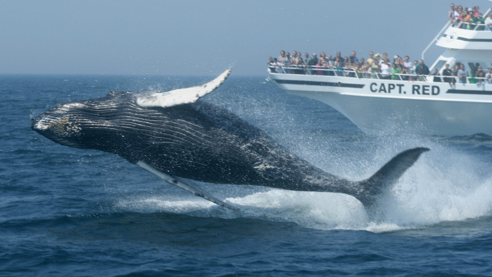 Things to Do in Cape Cod - Whale Watching